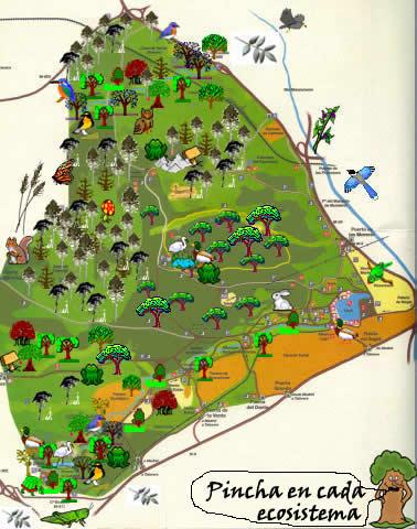Flora de la casa de campo author jorge calvo ganz - Mapa de la casa de campo ...